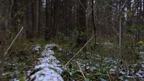 Around view in the forest undergrowth. In late autumn stock video footage