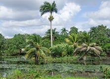 Around Vinales Valley in Cuba Stock Photos