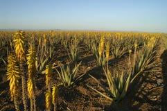 Arovera farm Royalty Free Stock Photography
