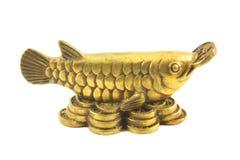 Arowana de cobre amarillo Foto de archivo libre de regalías