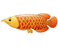 Arowana fish. Illustration of Arowana fish on white background Stock Image
