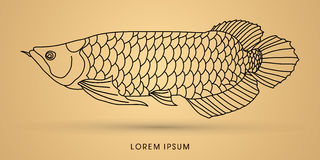 Arowana ryba grafiki wektor Obraz Stock