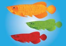 Arowana smoka ryba royalty ilustracja