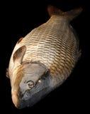 Сarp river fish on black Royalty Free Stock Image