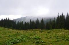 Arpathians de ¡ de Ð Image libre de droits