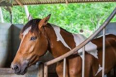 Arpenter d'écuries de cheval Photos stock