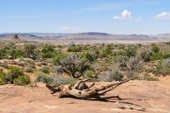 Arque la vue panoramique Utah de parc national image libre de droits