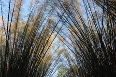Arqueie a vista de árvores de bambu douradas no parque foto de stock royalty free
