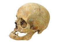 Arqueológicos viejos encuentran el cráneo humano del cráneo aislado en blanco Fotos de archivo