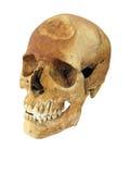 Arqueológicos viejos encuentran el cráneo humano del cráneo aislado en blanco Fotografía de archivo