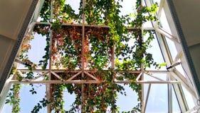 Arquitectura del naranjal de Minsk Bielorrusia - día de verano soleado, foto de flores tropicales exóticas y plantas imagen de archivo libre de regalías