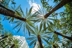 Arquitetura da cidade de Miami Beach foto de stock