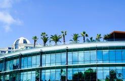 Arquitetura da cidade, palmeiras no telhado do escritório, o conceito da ecologia na cidade Kiev, Ucrânia, espaço da cópia imagens de stock royalty free
