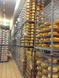 Arquivar com queijo imagem de stock royalty free