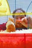 Arquivo da atribuição: O hamster olha o homem Fotografia de Stock