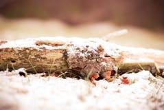 Arquivo de log do inverno em meu pátio traseiro imagens de stock