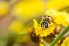 Arquivos da flor na natureza Fotografia de Stock Royalty Free
