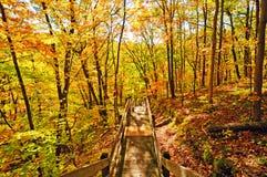 Arrástrese en el bosque de la caída Imágenes de archivo libres de regalías