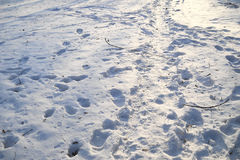 Arrástrese en la nieve después de una tormenta de la nieve Imágenes de archivo libres de regalías