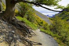 Arrástrese a lo largo de la ladera en Torres del Paine, Patagonia de Chile Fotos de archivo