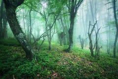 Arrástrese a través de un bosque hermoso misterioso en niebla Fotografía de archivo