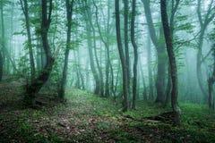 Arrástrese a través de un bosque oscuro misterioso en niebla con las hojas verdes Foto de archivo libre de regalías