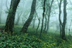 Arrástrese a través de un bosque oscuro misterioso en primavera Imágenes de archivo libres de regalías