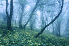 Arrástrese a través de un bosque oscuro misterioso en primavera Imagen de archivo