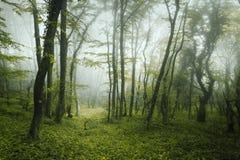 Arrástrese a través de un bosque oscuro misterioso en primavera Fotografía de archivo libre de regalías