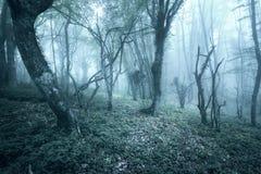 Arrástrese a través de un bosque oscuro misterioso en primavera Fotos de archivo libres de regalías