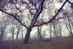 Arrástrese a través de un bosque viejo oscuro misterioso en niebla Mañana del otoño Foto de archivo