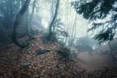 Arrástrese a través de un bosque viejo oscuro misterioso en niebla Otoño Fotografía de archivo libre de regalías