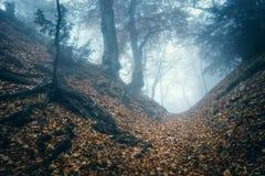 Arrástrese a través de un bosque viejo oscuro misterioso en niebla Otoño Foto de archivo