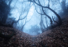 Arrástrese a través de un bosque viejo oscuro misterioso en niebla Otoño Fotografía de archivo