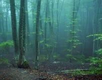 Arrástrese a través de un bosque viejo oscuro misterioso en niebla Otoño Fotos de archivo libres de regalías