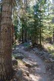 Arrástrese a través del bosque en parque nacional de secoya foto de archivo libre de regalías