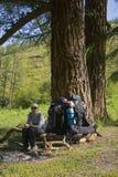 Arrêt sous l'arbre de mélèze Photo libre de droits