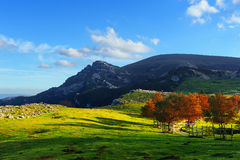 Arraba fields in Gorbea Stock Images