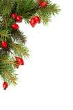arragement圣诞节绿色红色 库存照片