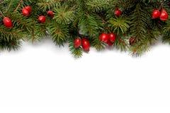 arragement圣诞节绿色红色 免版税库存图片
