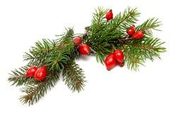 arragement圣诞节绿色红色 免版税图库摄影