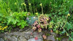 Arragement hermoso de la flor de la montaña fotos de archivo