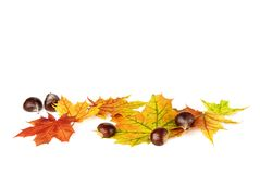 Arranged fallen down leaves and chestnuts on white Royalty Free Stock Images