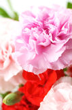 Arranged flower. Carnation and some arranged flowers Stock Images