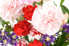 Arranged flower. Carnation and some arranged flower Royalty Free Stock Photos