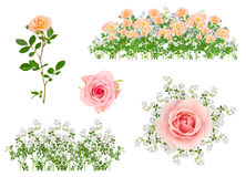 Arranged isolated flowers Royalty Free Stock Photos