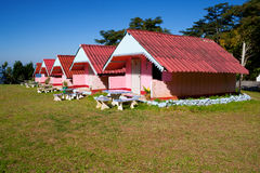 Arranged pink houses in a yard Royalty Free Stock Image