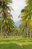 Arranged in a row, the coconut trees Stock Photography