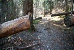 Arranged trekking path Stock Photography