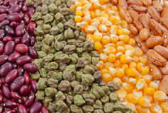 Arranged variety of seeds Stock Image
